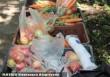 Zöldséget és gyümölcsöt osztunk rászorulóknak